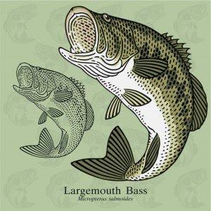 best baitcasting rod for bass