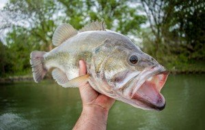 bass fishing tips for beginners