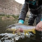 what is ultralight fishing
