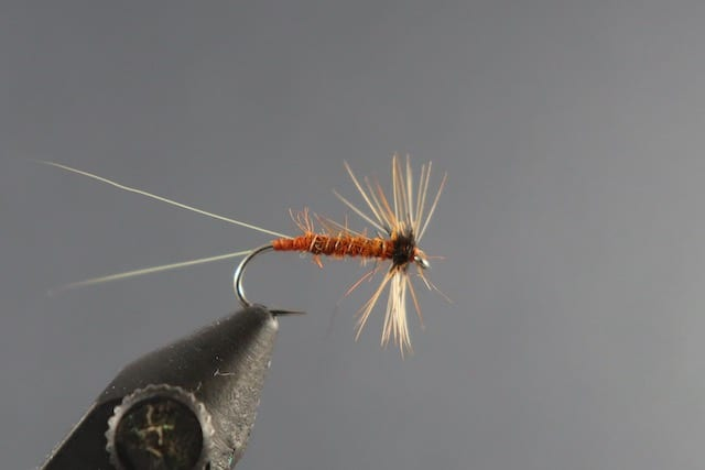 fly tying pic of a red spinner