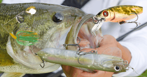 Featured image best bass lures