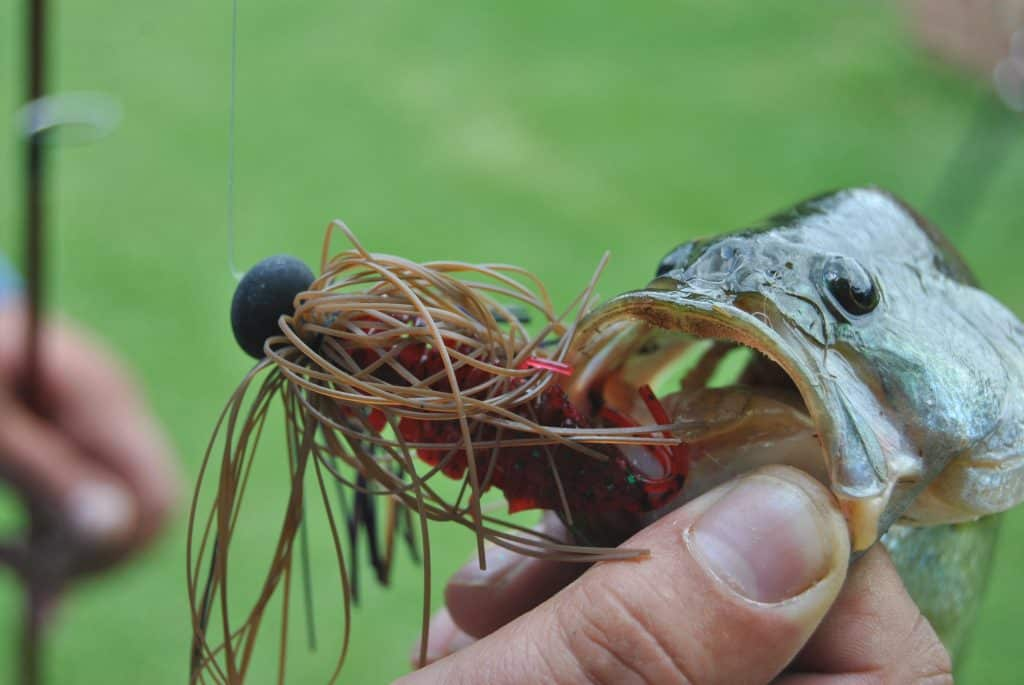 best smallmouth bass lures image of a bass with a jig in its mouth