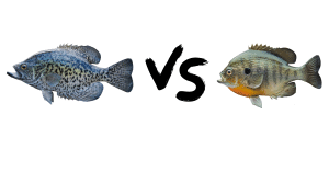 Crappie vs Bluegill feature image
