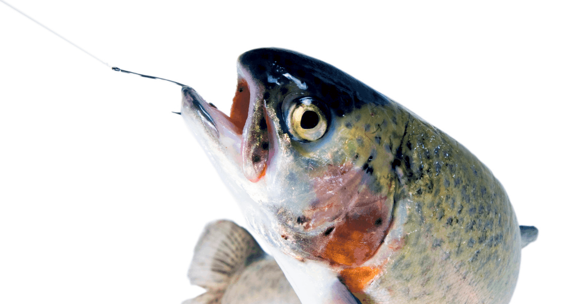 What size hook for trout Feature Image
